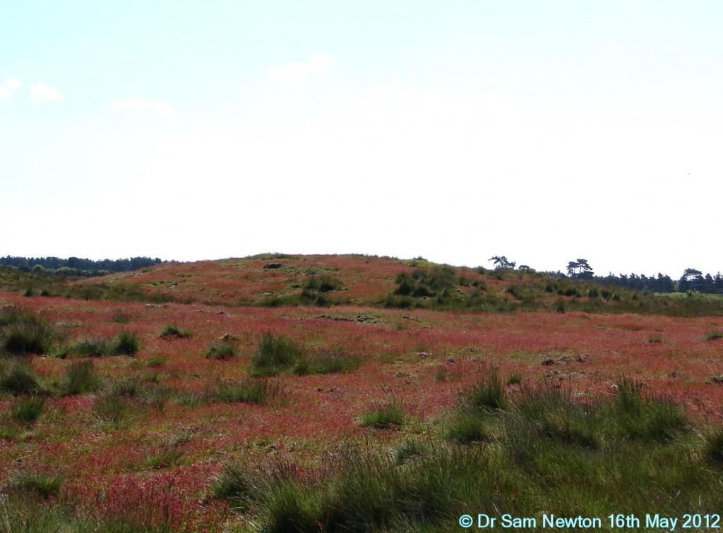 Sutton Hoo Mound 9 © Dr Sam Newton 16th May 2012
